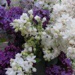 a lilas