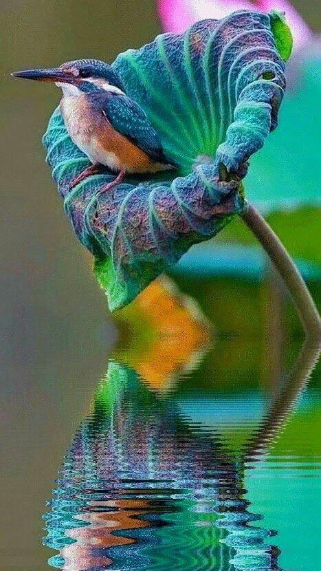 nature nati ventura