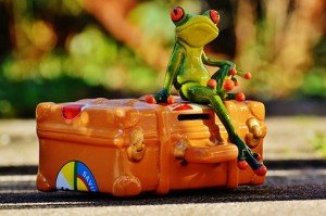 frog-valise-grenouille