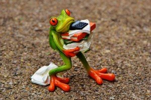 grenouille frog2
