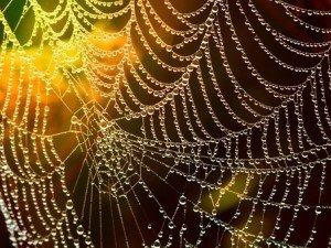 network-araignée