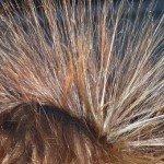 hair-113313__340