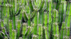 cactus-1453793_960_720