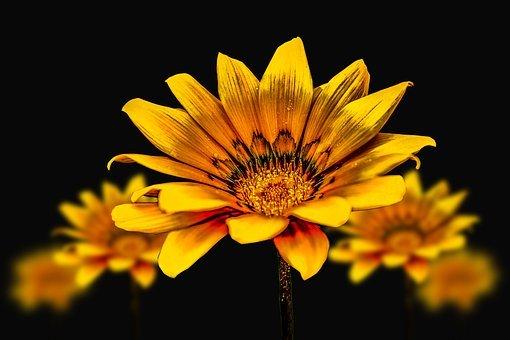 flower-gerbel-3720383__340