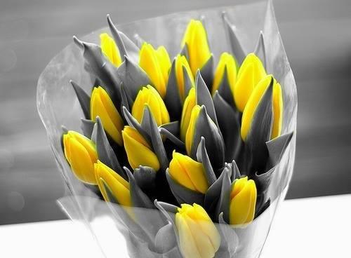 fleurs j