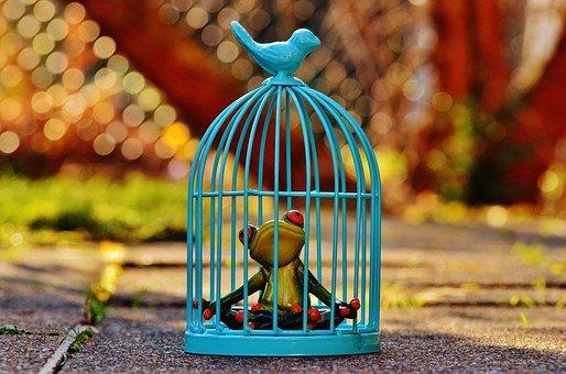 grenouille en cage