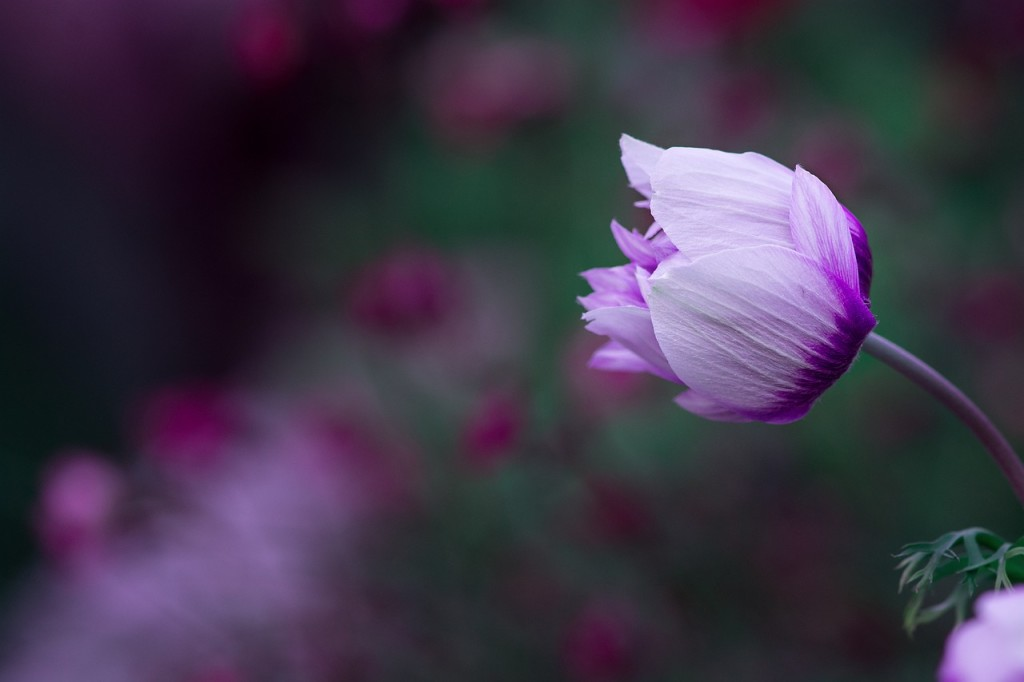 fleur toni bernhard