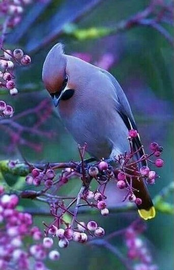 oiseau violet