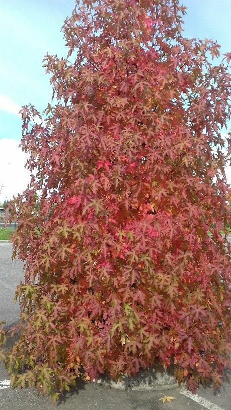 automne 21